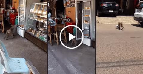 Monkey steals milk from refrigerator on street (Video)