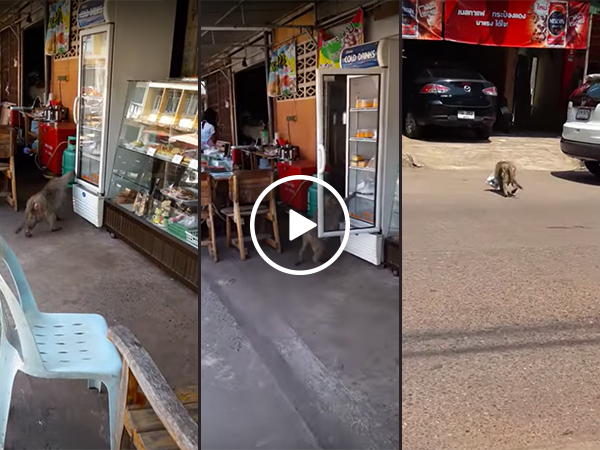 Monkey steals milk from refrigerator on street (Video)