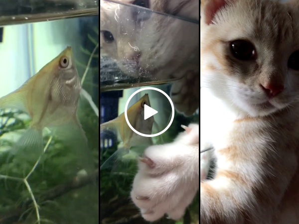 Cat and fish are best friends (Video)