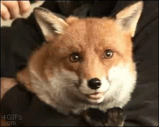 these animals are too cute not to smile 10 gifs 212 These animals are too cute not to smile (10 Gifs)