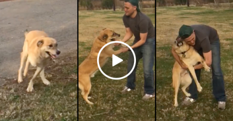 Dog can't contain excitement after owner returns from deployment