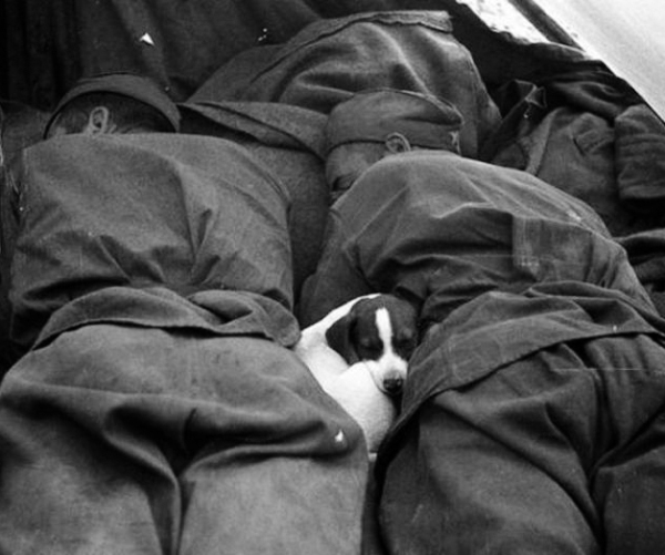 warming soldiers hearts back in the day 215 Animals warming war torn hearts…back in the day (48 Photos)