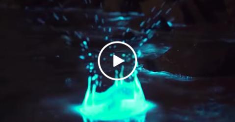Incredible example of bioluminescence in Tasmanian waters (Video)