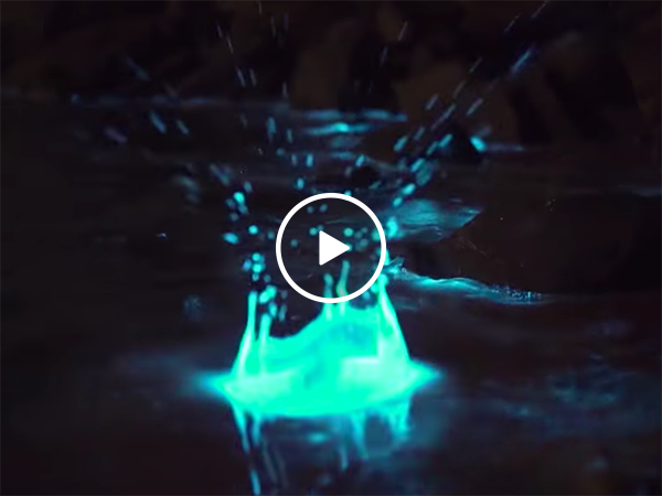 Incredible example of bioluminescence in Tasmanian waters (Video)