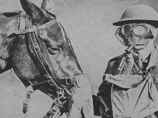 Remarkable instances of animals in war (13 Photos)