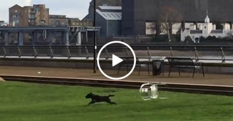 Chair chases dog through the park (Video)