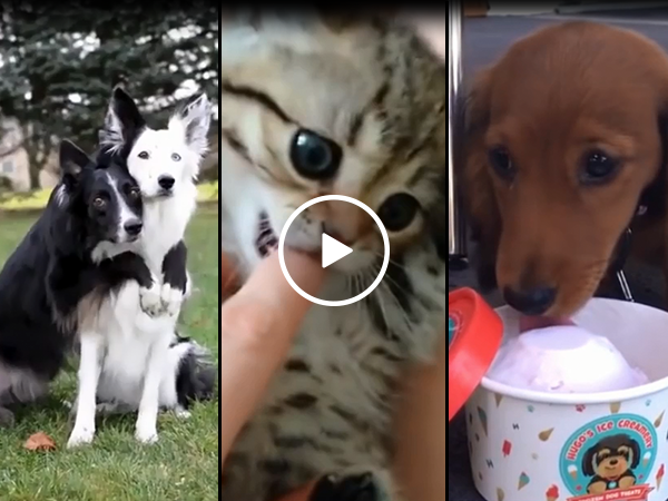 Cute animal compilation to brighten your day (Video)