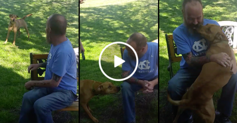 After weeks in the hospital, dog doesn't recognize owner until sniffs