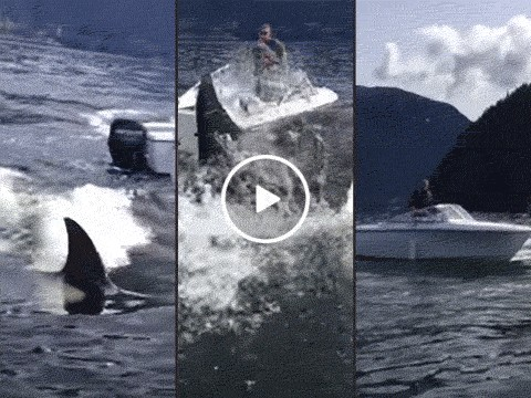 Boaters caught in middle of orca attack