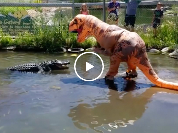 Darwin Award Nominee taunts 500-pound gator dressed as T-Rex (Video)