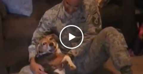 Soldier returns home to excited dog (Video)