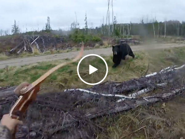 Black bear charges man, shows what certain death looks like (Video)