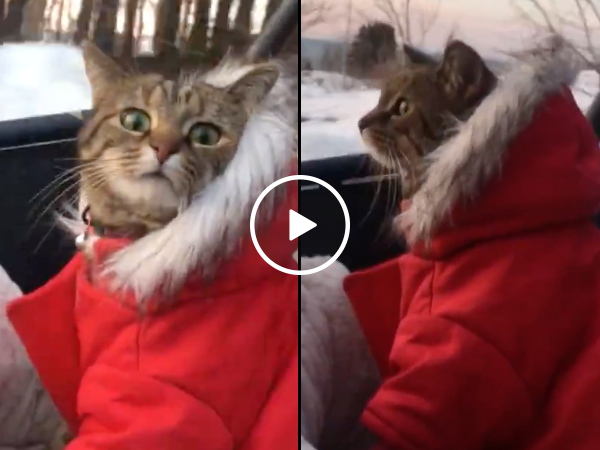 A cat in a coat on an ATV in the winter (Video)