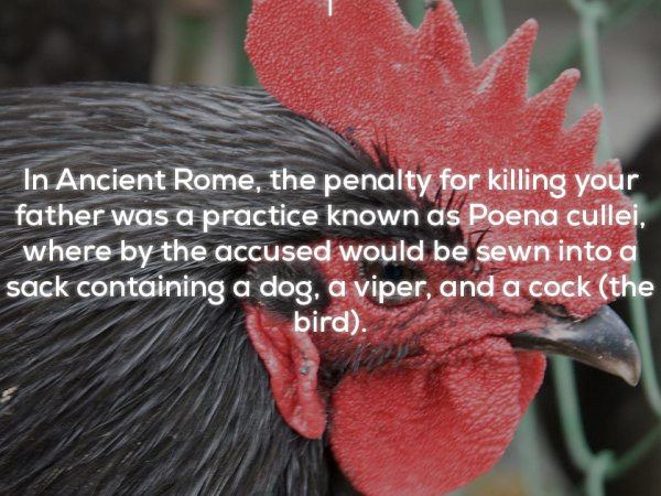 Some creepy and bizarre facts from around the world (23 Photos)