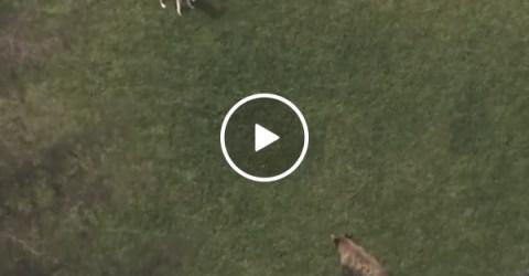 Dog chases off bear intruder