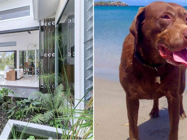 Website helps people travel the world looking after pets (13 Photos)