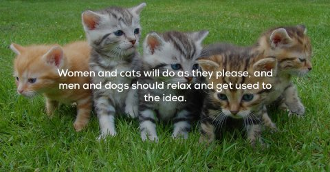 A collection of quotes about cats (25 Photos)
