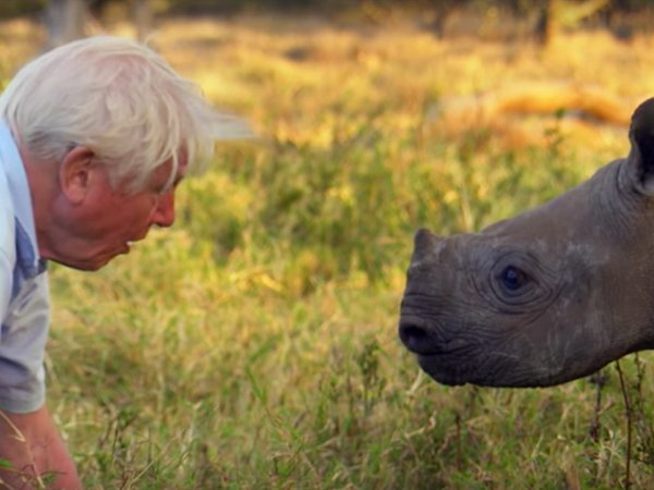 Facts about the legendary Sir David Attenborough (25 Photos)
