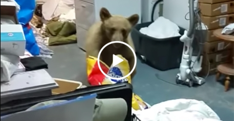 Family catches bear stealing their dog food