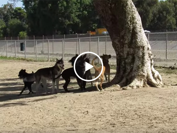 Squirrel gets away from a pack of dogs