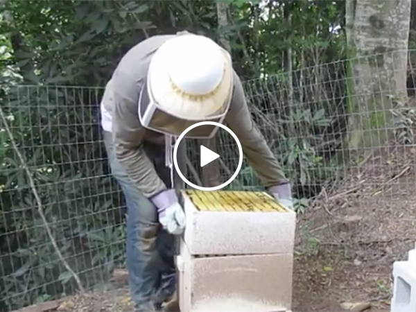 Beekeeper drops the hive and gets stung