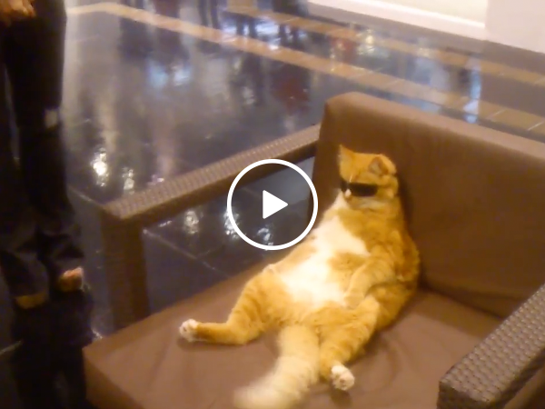 Cool cat in sun glasses chills at mall (Video)