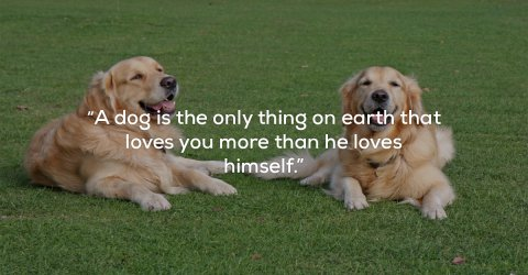 Famous quotes on the greatness of dogs (25 Photos)