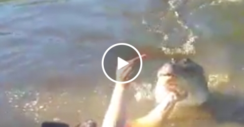 Darwin Award Nominee jumps in water with croc... for a selfie (Video)