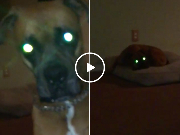 You don't walk demon dog, demon dog walks you (Video)