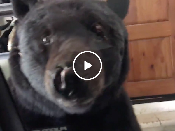 Woman sees bear outside her car