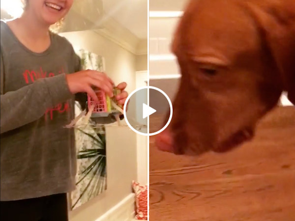 Egg drop experiment turns into a dog's snack (Video)