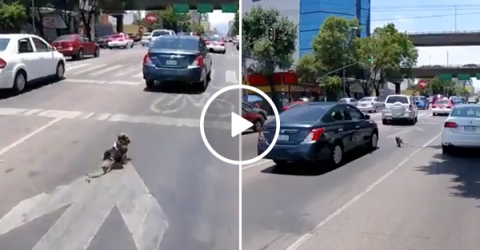 Dog defies death multiple times running into oncoming traffic (Video)