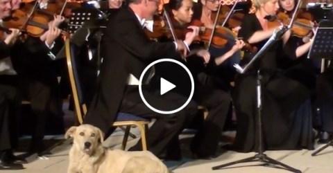 Dog walks on stage during concert