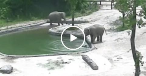 Mother elephant saves baby elephant