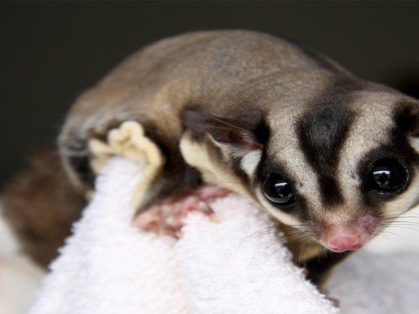 Strange animals you can legally own in the USA (26 Photos)
