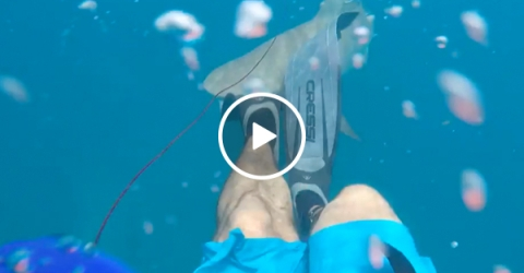 [NSFW] Shark attacks a spearfisher (Video)