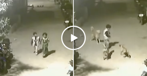 Brave boy fights off pack of wild dogs saving little girl in process