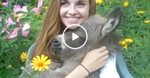 This girl This girl has an adorable ass (Video)as an adorable ass (Video)
