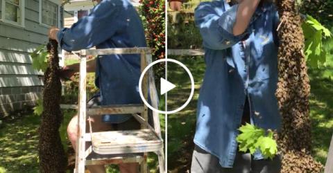 In true DGAF moment, bada$$ elderly woman takes down massive beehive (Video)