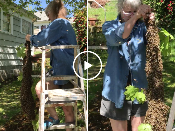 In true DGAF moment, bada$$ elderly woman takes down massive beehive (Video)