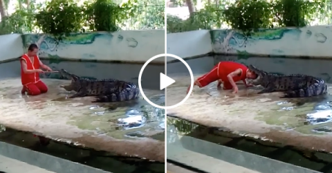 Head in crocodiles mouth trick goes wrong (Video)