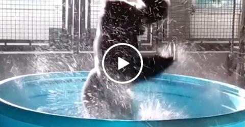 Gorilla dancing to Maniac in pool
