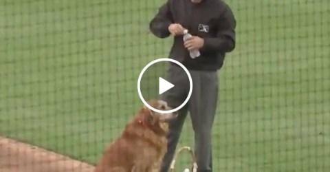 Dog is waterboy at baseball game