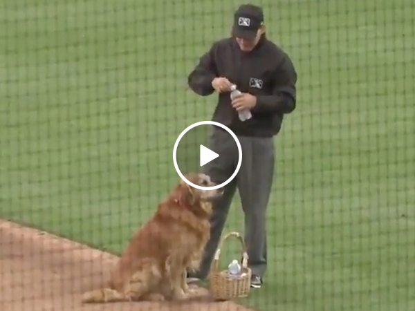 Dog is waterboy at baseball game