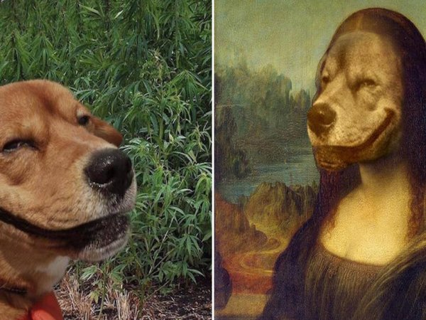 Grinning dog in weed field gets the Photoshop treatment (18 Photos)