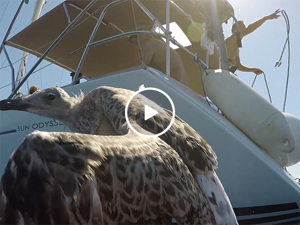 Heroic guys save injured seagull from the sea (Video)