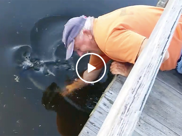 Guy catches fish with bare hands