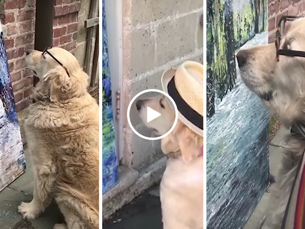 Adorable dog views owner's artwork (Video)