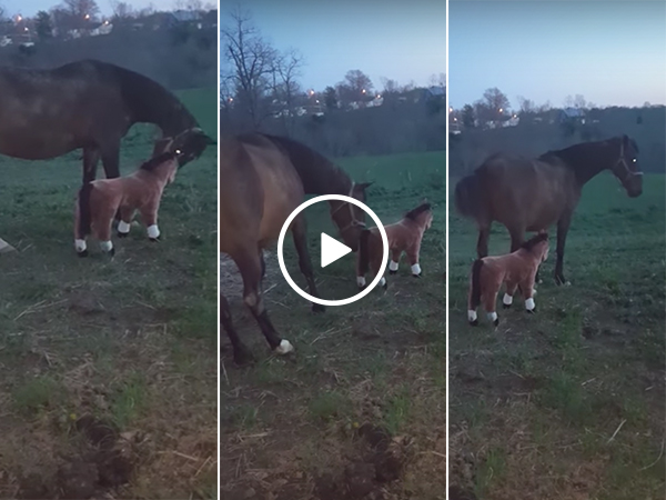 Real horse kicks face horse in the head (Video)