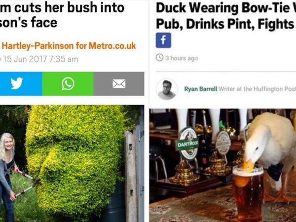 Funny and ridiculous newspaper stories (24 Photos)